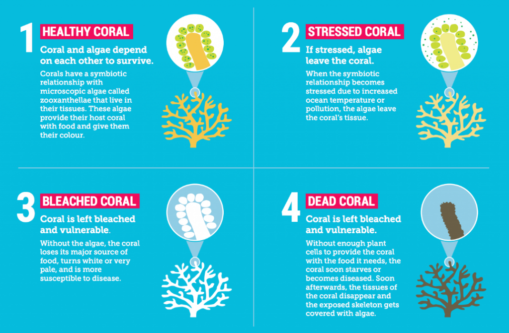 Great Barrier Reef   tiger reserves in india
