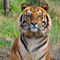 tiger reserves in india UPSC Current affairs
