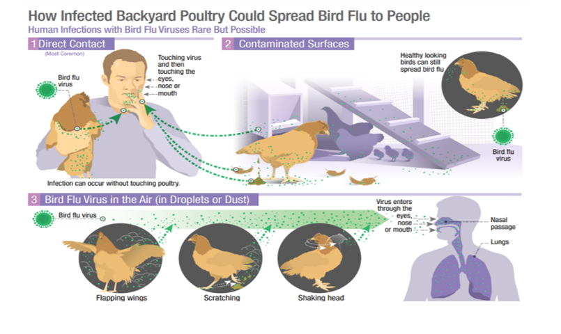 India has recorded first death due to H5N1 avian influenza this year |Insolvency and Bankruptcy Board of India
